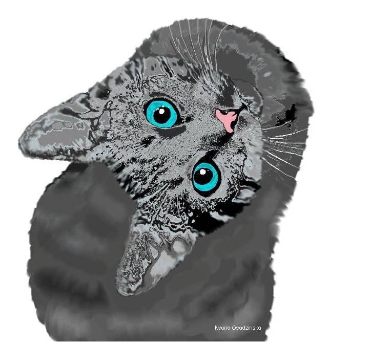 Kot - Iwona Osadzińska